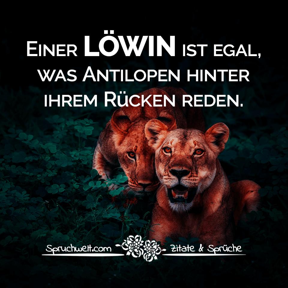 selbstbewusste sprüche Einer Löwin ist egal, was Antilopen hinter ihrem Rücken reden  selbstbewusste sprüche
